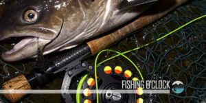 Best-Fishing-Line-Reviews-buying-guide-featured