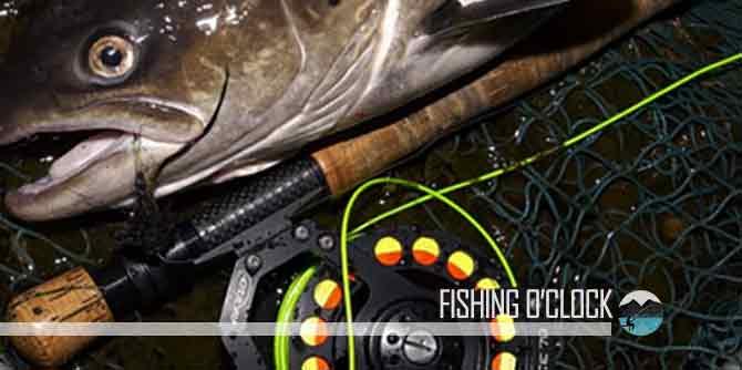 Best Fishing Lines - (Reviews & Fresh / Salt-Water Guide 2019)
